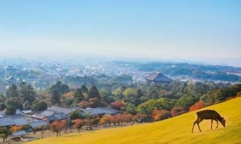 奈良県にある人気のカジノバー!お酒を飲みながら楽しめる♪